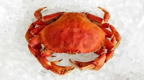 Frozen Cooked Dungeness Crab